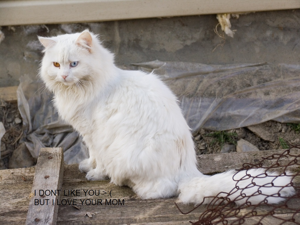 dab image 492233] fluffy white cat know your meme