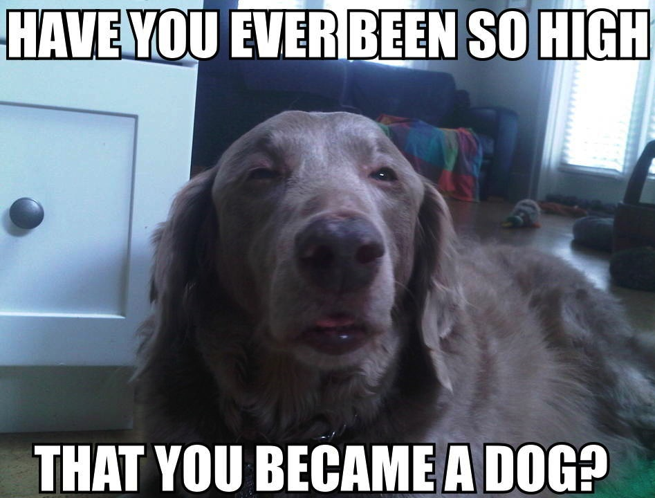 You Got It Animal Meme  10  Dog image macros were