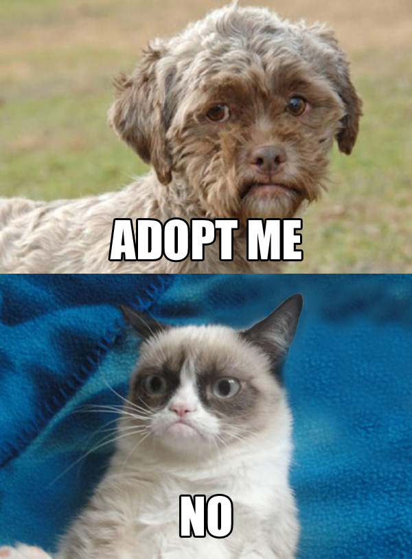 2f5 dog with human face needs adoption grumpy cat know your meme