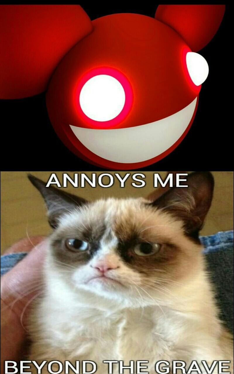 Cat Meme Stahp