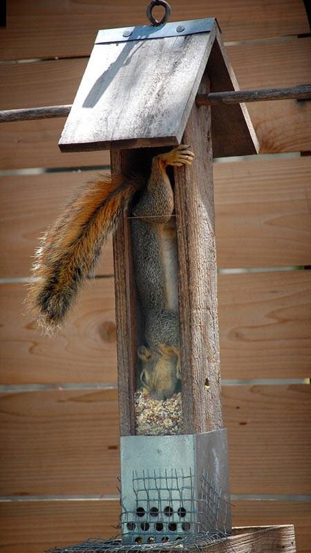6ea squirrel stuck in bird house fail epic fail know your meme