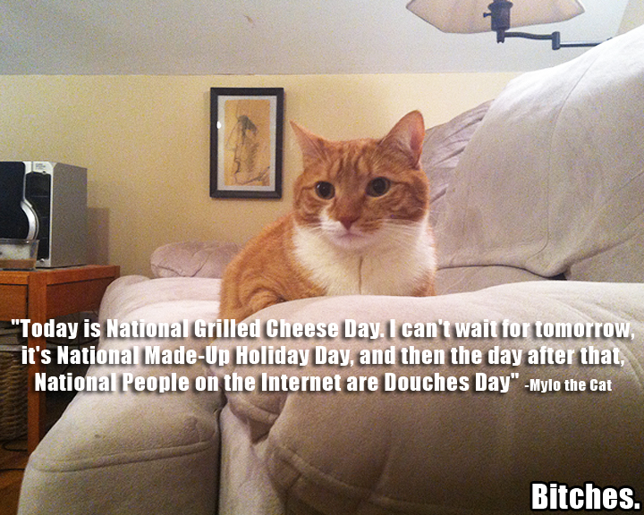 857 national grilled cheese day mylo the cat know your meme