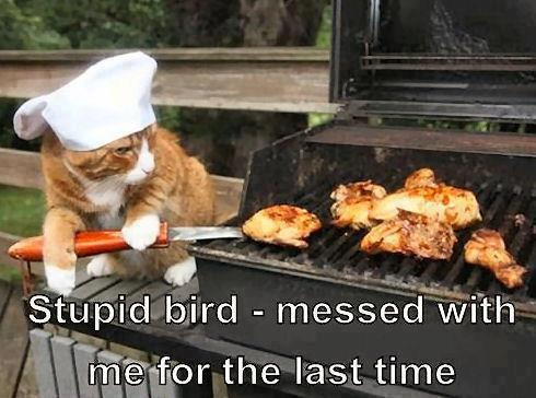 f08 bbq birds cats know your meme,Funny Bbq Meme
