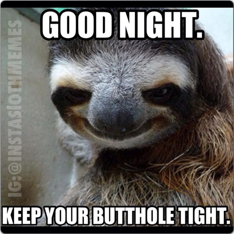 56f sloth nighty night sloths know your meme,Sloth Meme Images