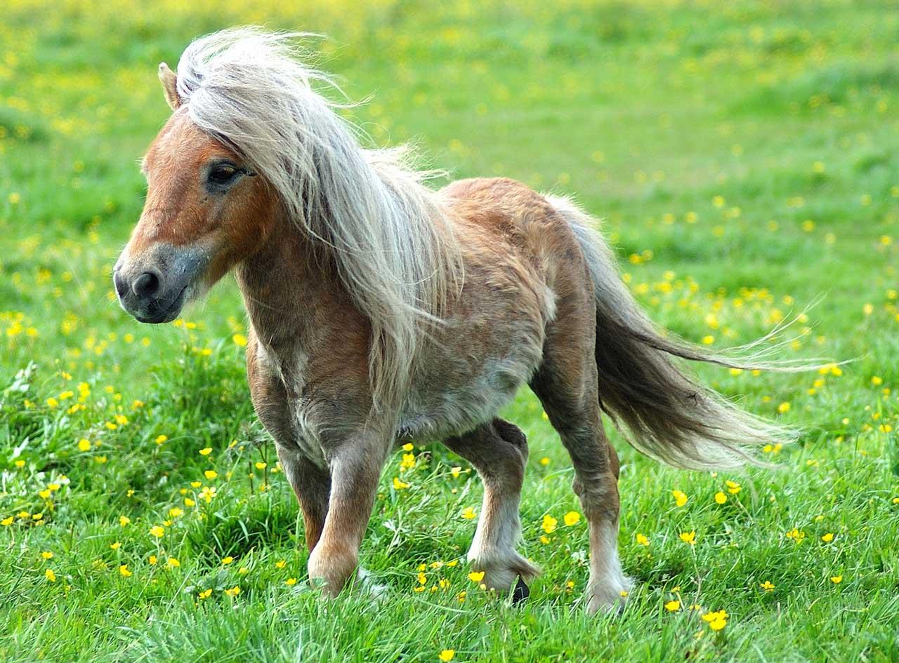 Uncategorized Pony Picture image 548069 my little pony friendship is magic know your meme b07 jpg