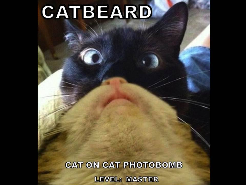 bd4 image 550673] cat beards know your meme