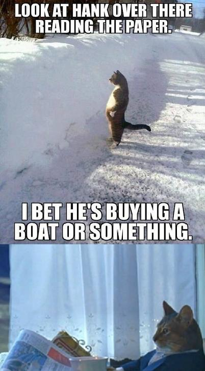 4c8 image 579495] i should buy a boat cat know your meme