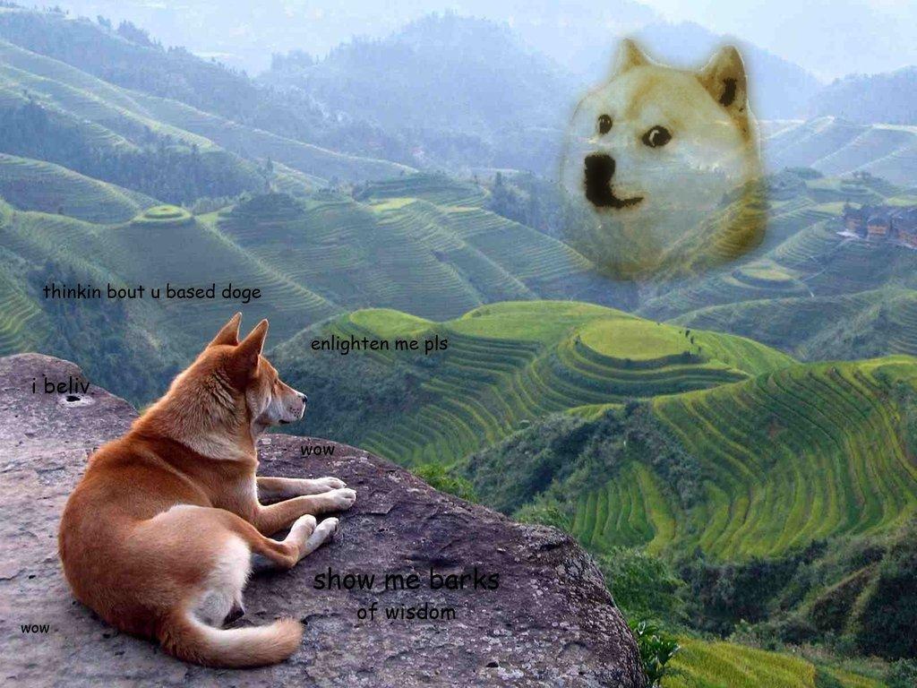 doge twinkie wallpaper hankd9 - photo #17