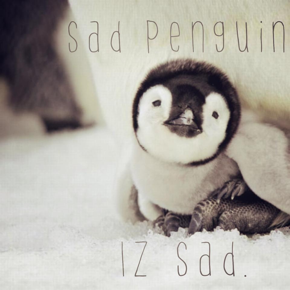 2b5 sad penguin know your meme,Cute Penguin Meme
