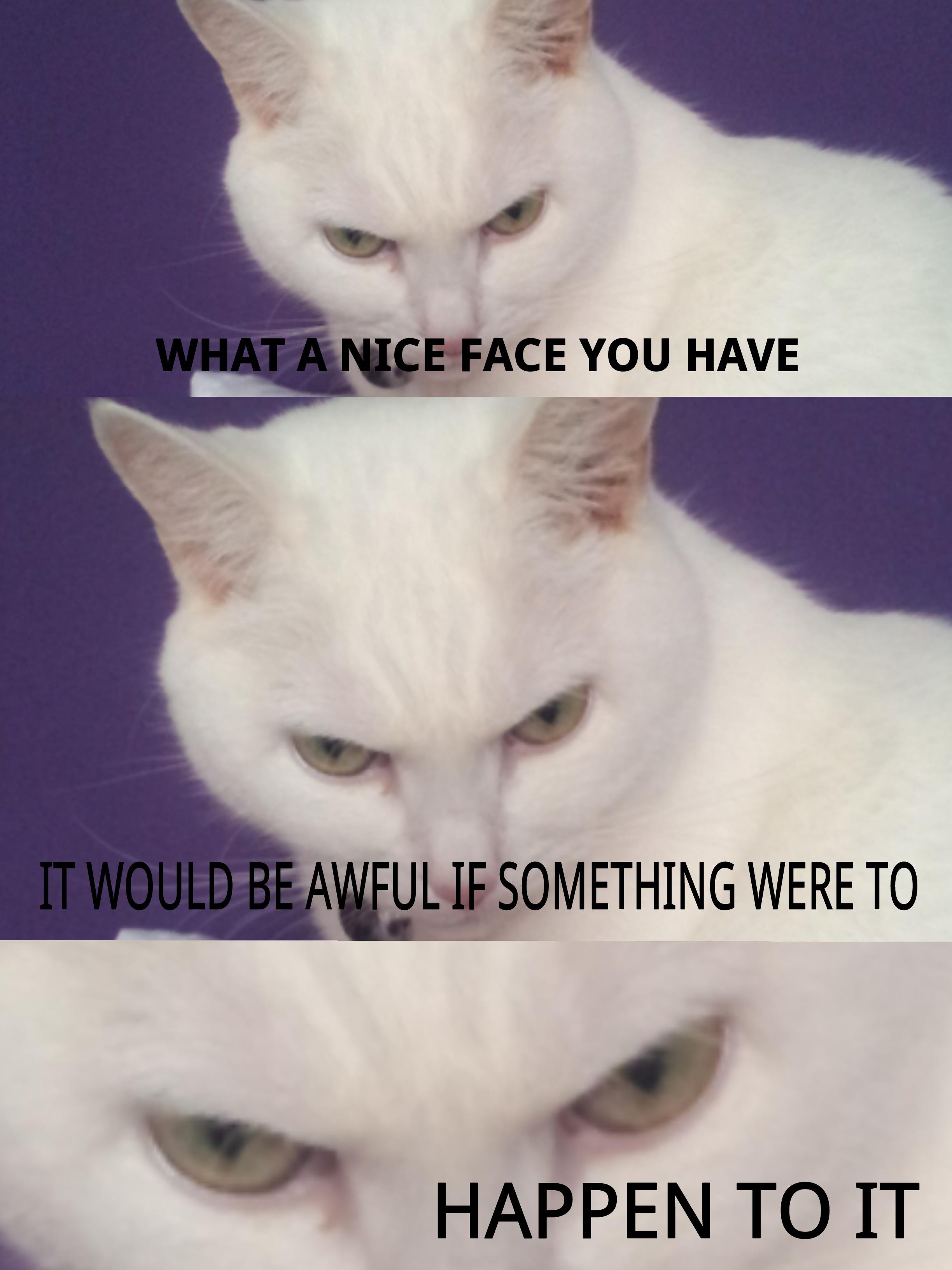 8f7 my cat, luna, is evil know your meme