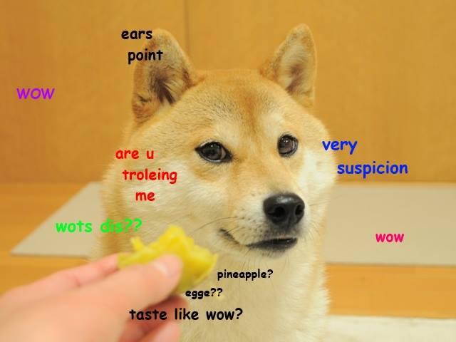 Wow Doge Original | www.pixshark.com - Images Galleries ...