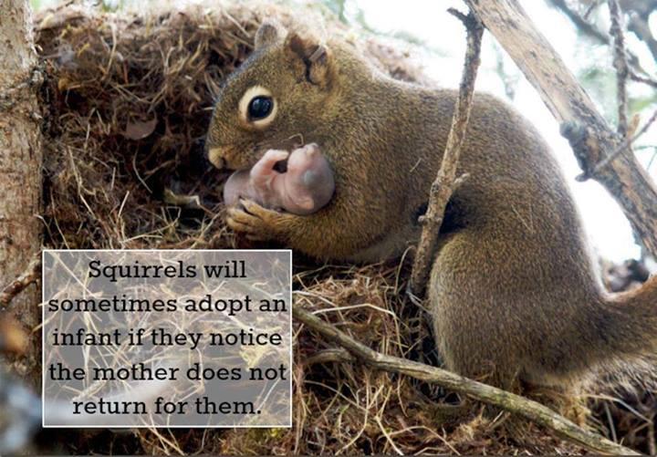 1cc adoption animals know your meme