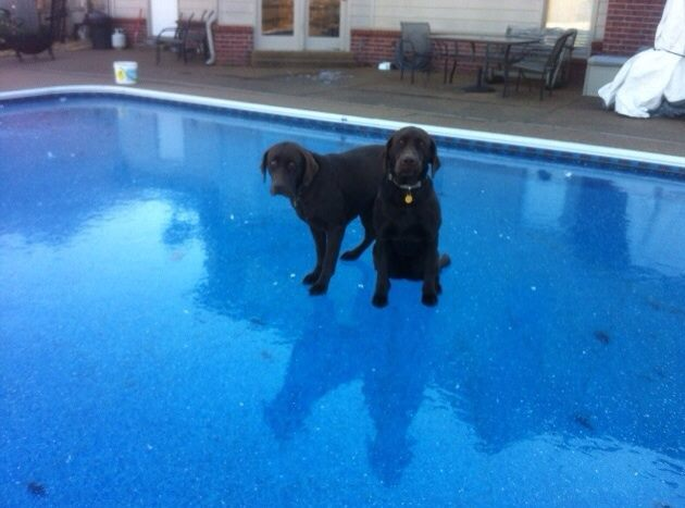 309 sorry girls no swimming today dogs know your meme