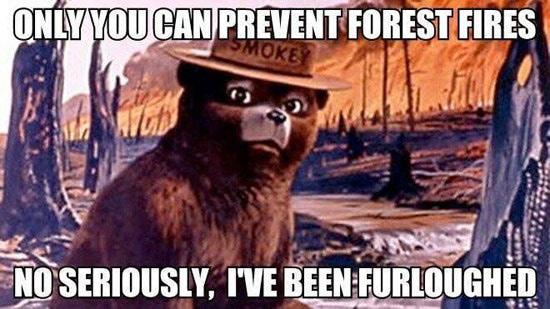 Image result for smokey the bear meme