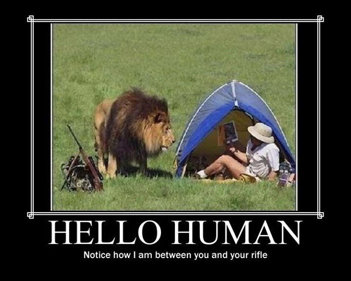 Lion win | Demotivational Posters | Know Your Meme