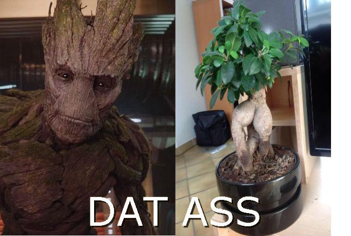 Groot Likes Dat Ass   'Dat Ass   Know Your Meme