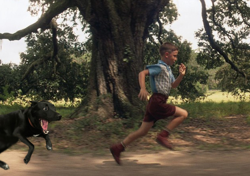 a70 forrest gump runs from dog overly excited dog know your meme