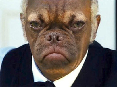 d36 samuel jackson & earl faceswapped earl the grumpy puppy know
