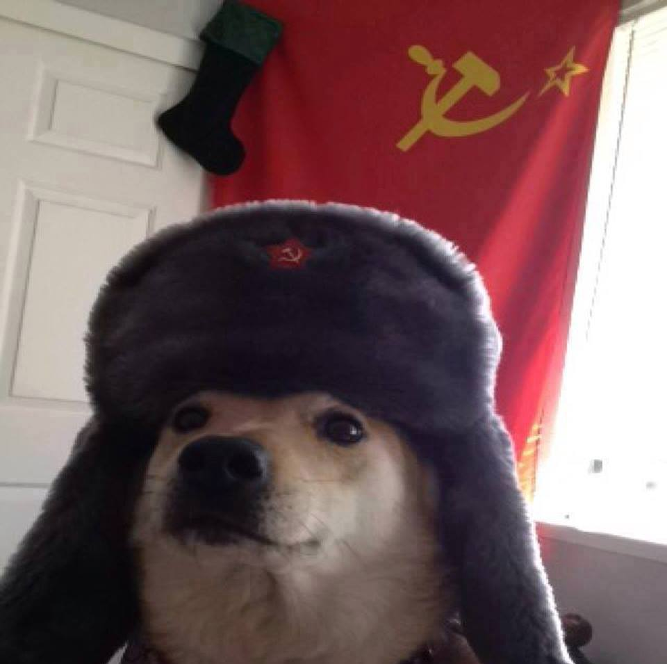 daa man's best comrade dogs know your meme