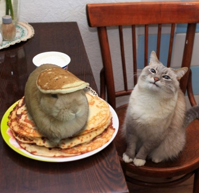 829 mr human, there is a rabbit in my food! animals know your meme