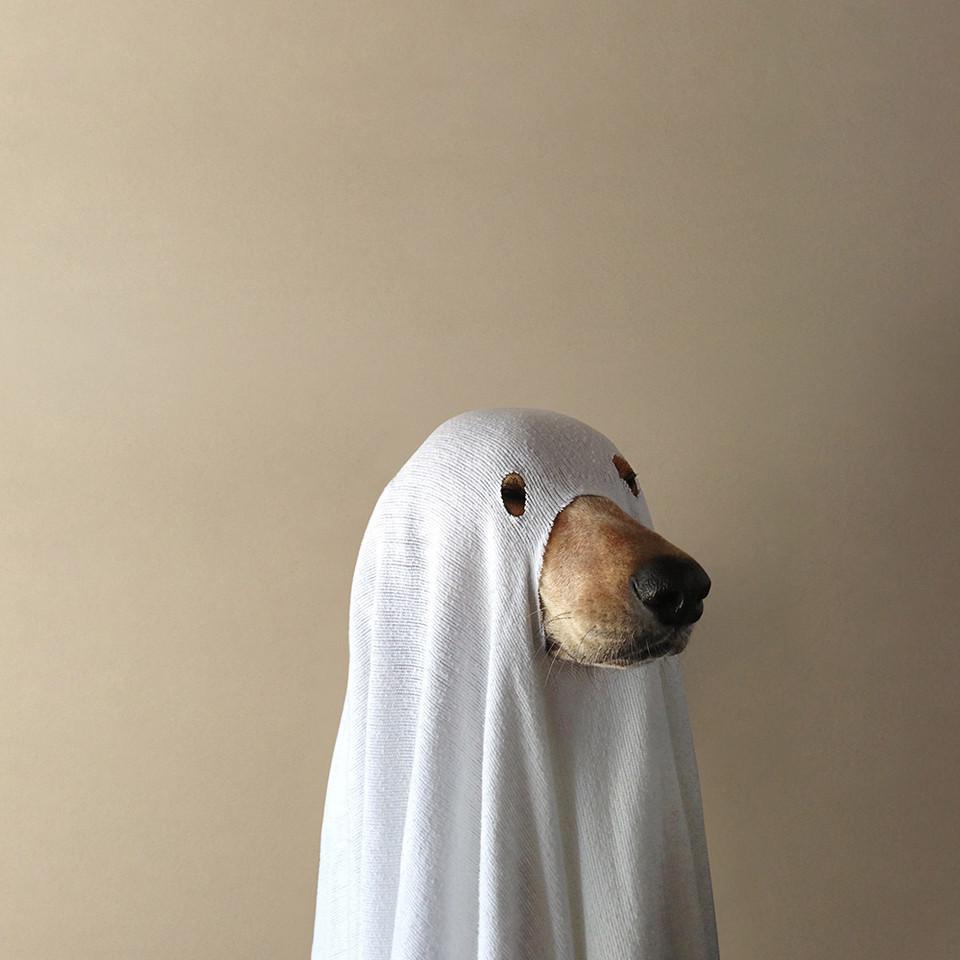 Daniel Shaver Killing >> Spoopy Dog | Dogs | Know Your Meme