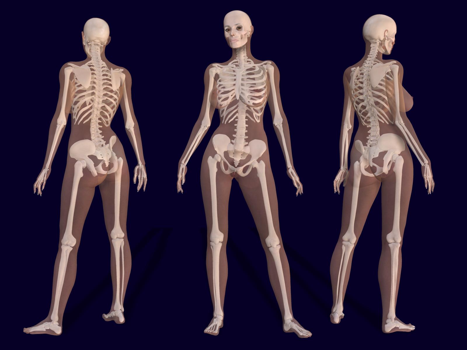 The female skeleton diagram | Skeletons | Know Your Meme