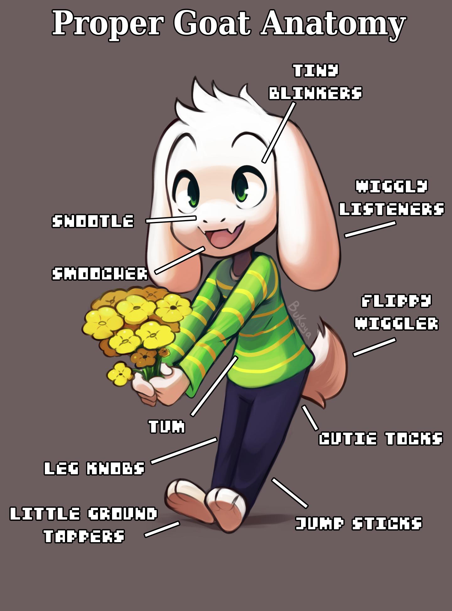 Proper Goat Anatomy Undertale Know Your Meme