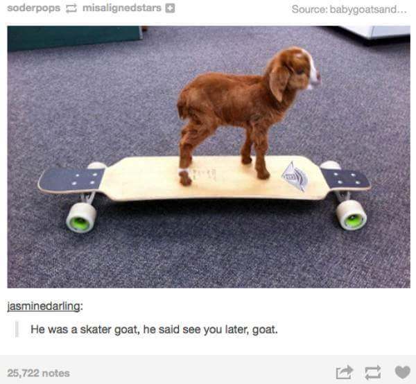 b80 he was a skater goat, he said see you later goat goats know your