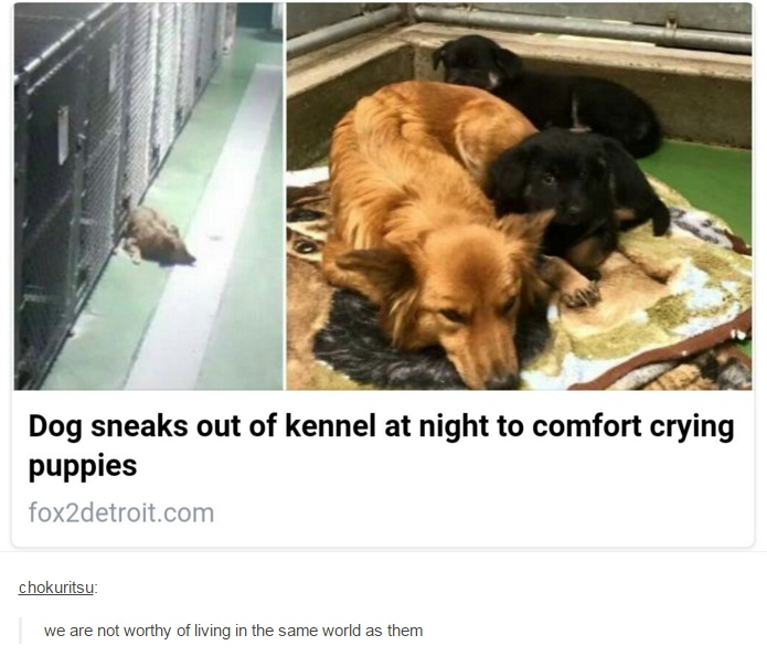 825 dog sneaks out of kennel at night to comfort crying puppies dogs