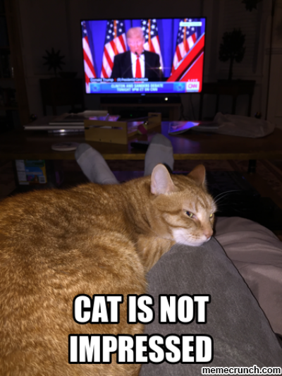264 cat is not impressed donald trump know your meme