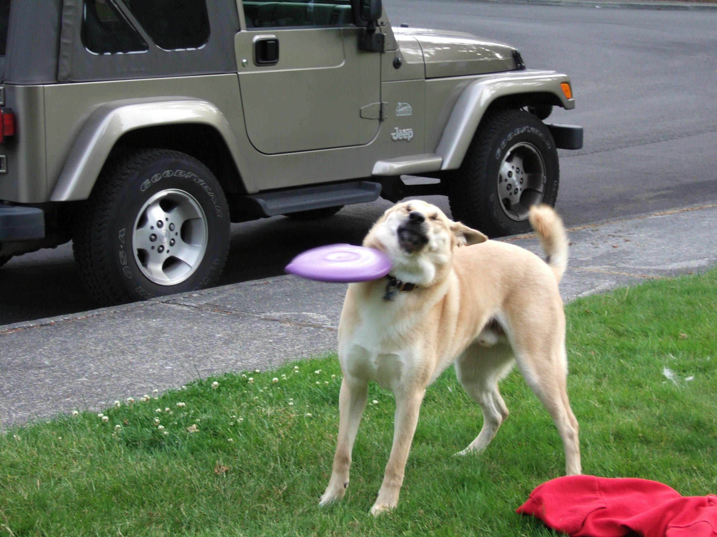 836 original frisbee doge frisbee doge know your meme