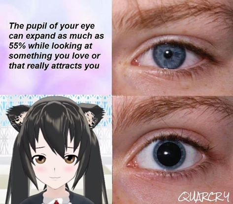 81a this should be a new meme catgirl neko know your meme