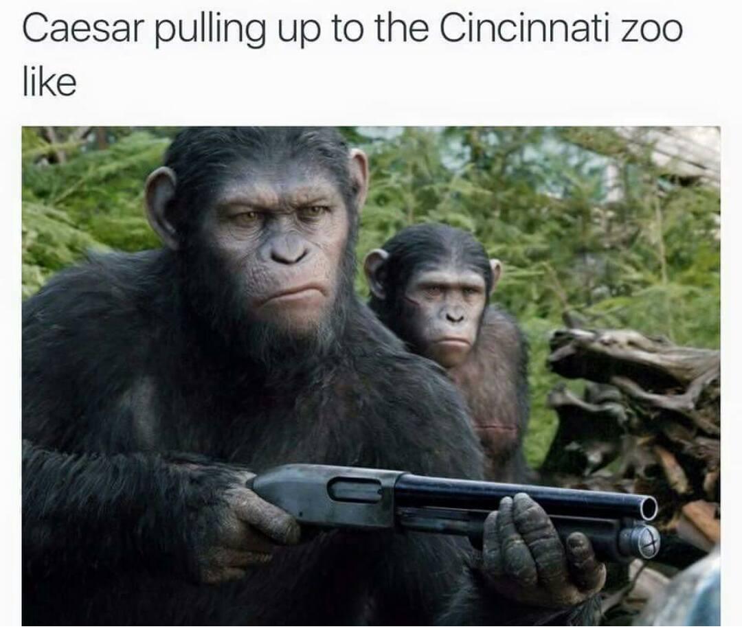 6e1 ohhh shit harambe the gorilla know your meme