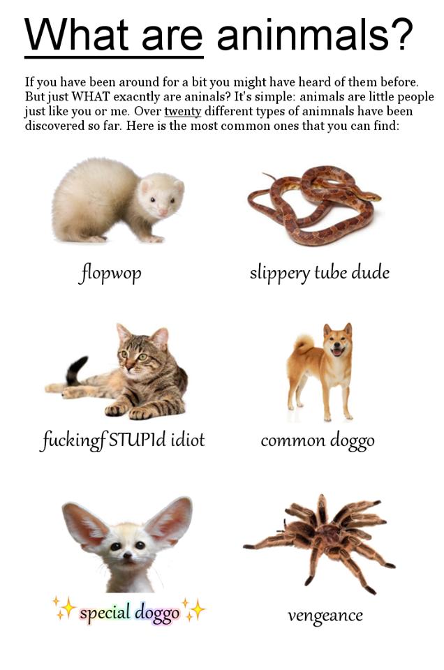 Dog Name Chart Doggo