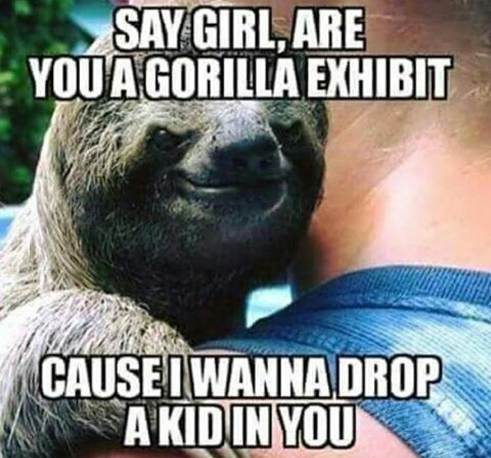 8b5 pick up line harambe the gorilla know your meme,Meme Pick Up Lines