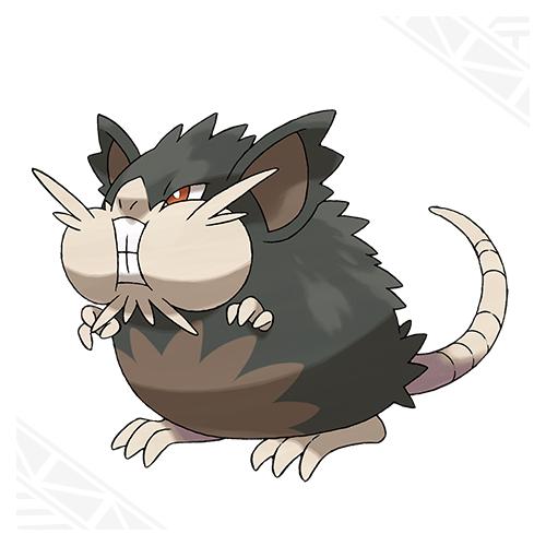 Alolan Raticate | Pokémon Sun and Moon | Know Your Meme