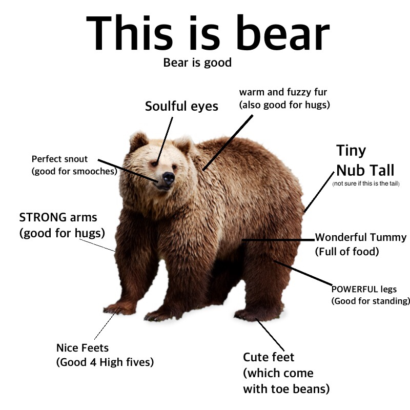 a59 this is bear bear is good proper anatomy know your meme,Meme Bear