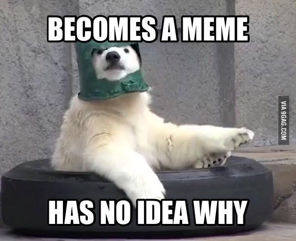 This meme is un-bear-able   Poorly Prepared Polar Bear ...