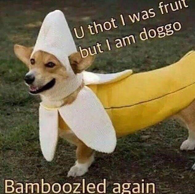 9bc bamboozled banana doggo know your meme