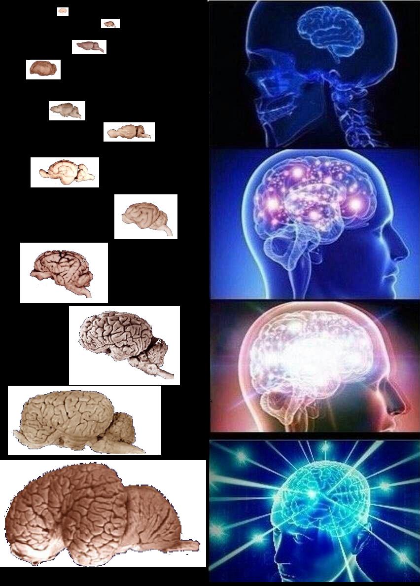 imgenes de brain expanding meme maker three brain meme template png 852x1188 brain meme maker