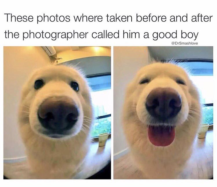 5bf dog makes costly mistake bettereveryloop