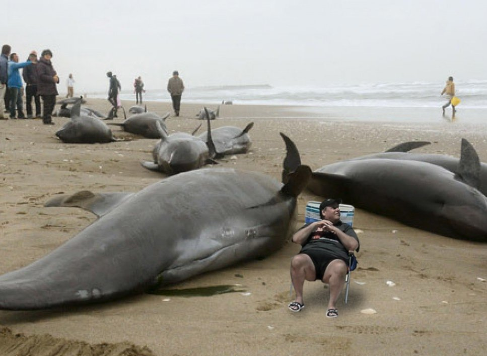 257_large beached whales chris christie beach picture know your meme