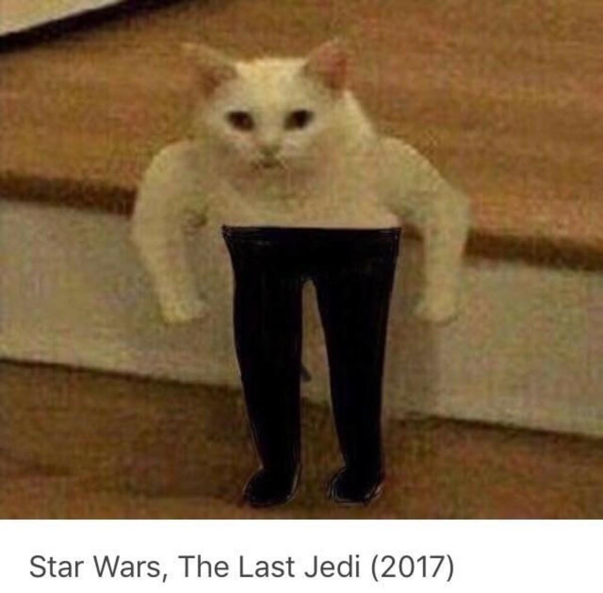 Dank Cat Memes Nsfw
