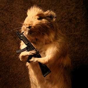 A Concerned Rifleman
