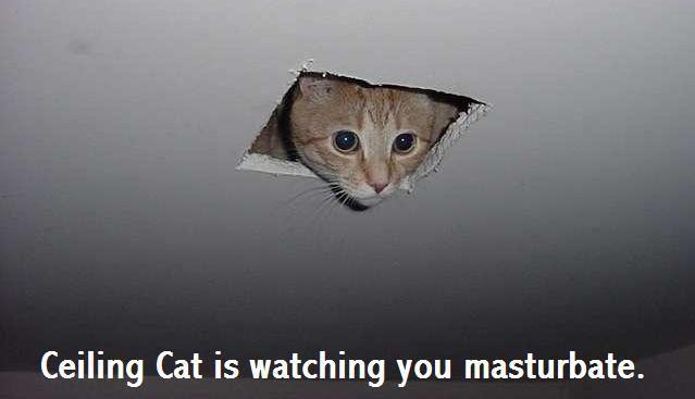 Ceiling_Cat_by_SleepySnitter.jpg